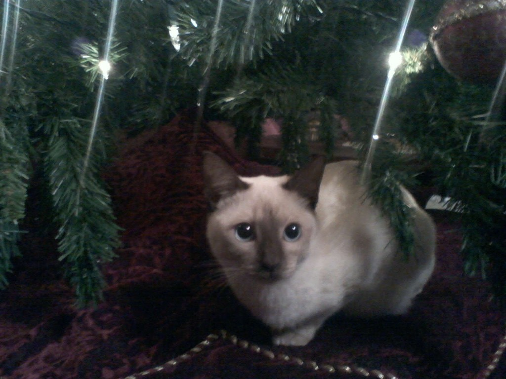 What a beautiful gift! To have a cat as sweet as this under our tree. :)